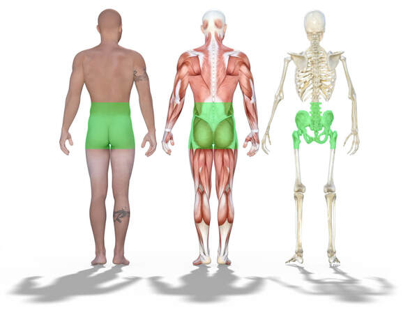 A picture showing a human, a muscle figure and a skeleton and where you would feel low back pain